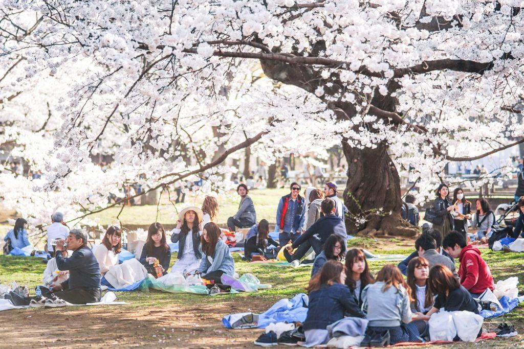 Hanami-Yoyogi-Park-2